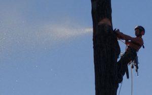 Baumfällung Abklotzen 1